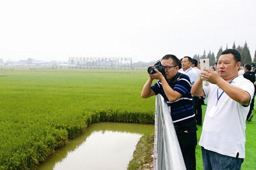 我市大力发展稻渔综合种养 促进农业转方式调结构